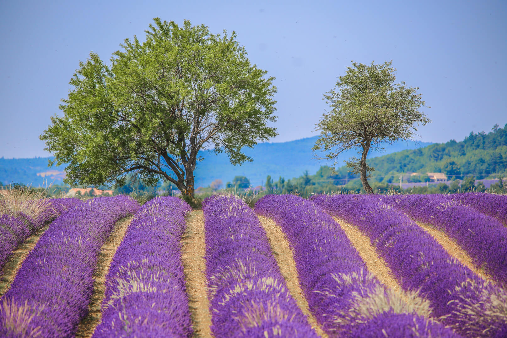 Een weekend in het land van de lavendel