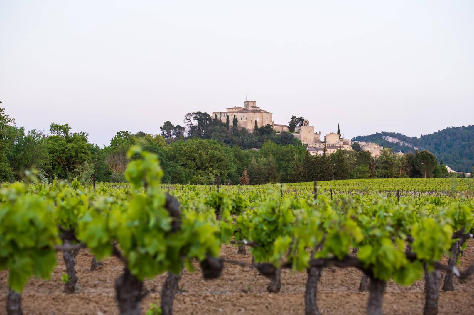 De wijngaarden van de Luberon