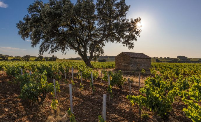 Vignobles de la Vallée du Rhône @ Kessler