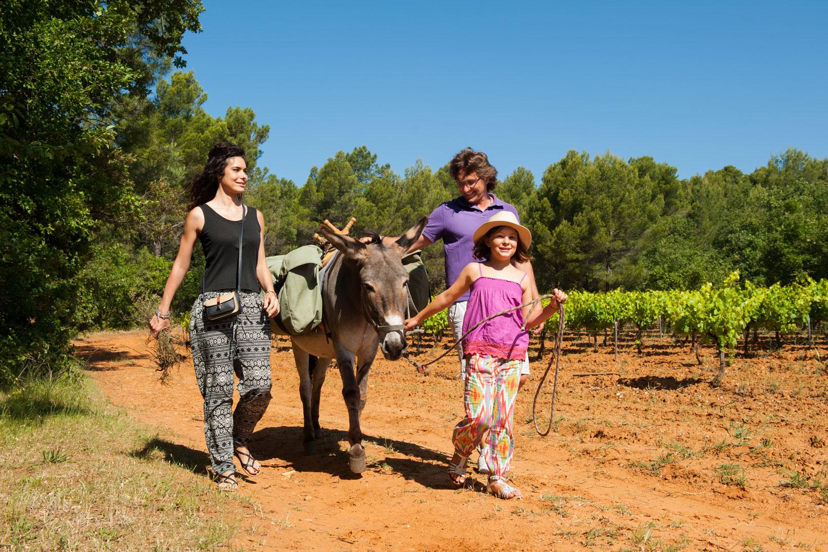 Balades avec les ânes en Provence @ Cintas Florès