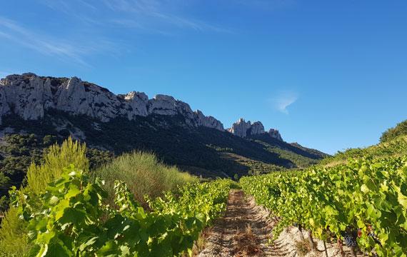 Vignobles de Dentelles de Montmirail @ Maisonnave