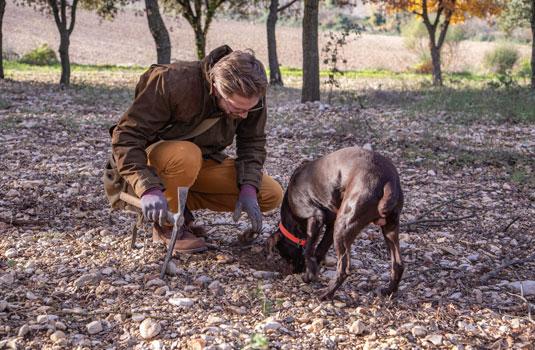 Zoeken naar de truffel in de Vaucluse