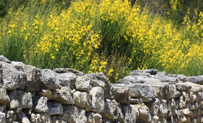 Langs de botanische paadjes van de Vaucluse