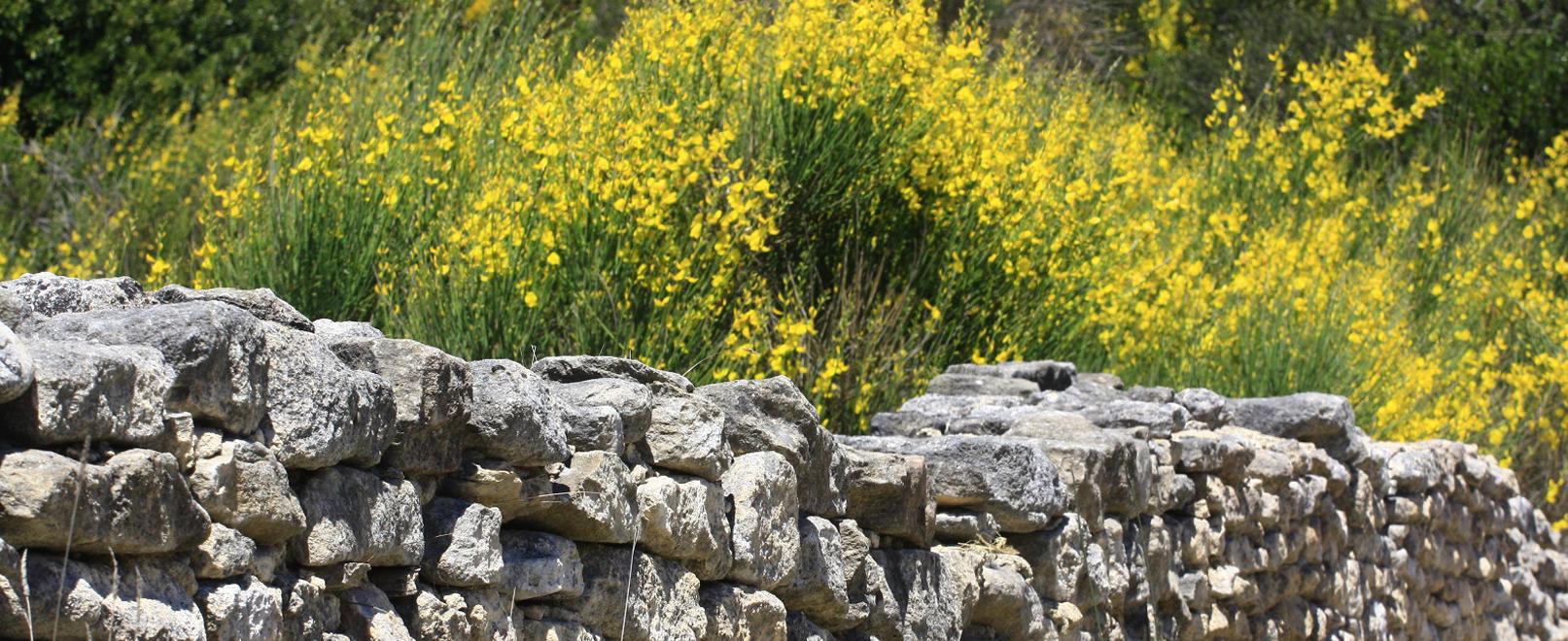 Langs de botanische paadjes van de Vaucluse © Hocquel