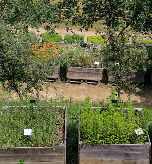 Medicinale en wilde planten - Luberon