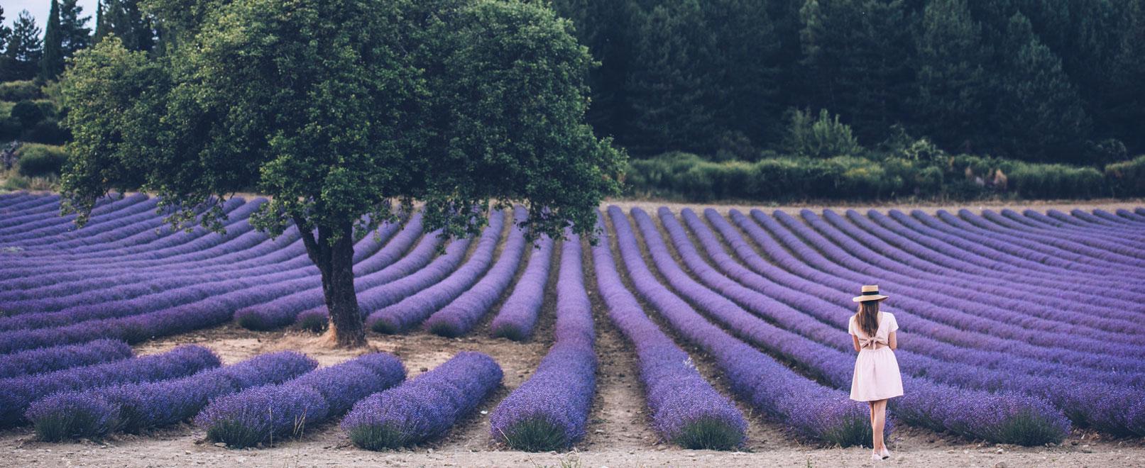 Bijzondere plekjes om lavendel te bewonderen en te fotograferen  © Coquard