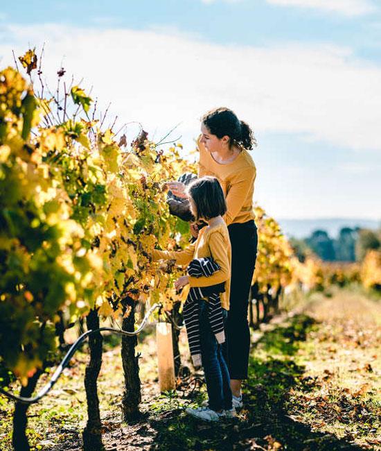 De wijngaardpaden om de terroirs en druivensoorten te ontdekken