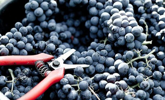 Hoogtepunten om de wijngaard op een andere wijze te ontdekken