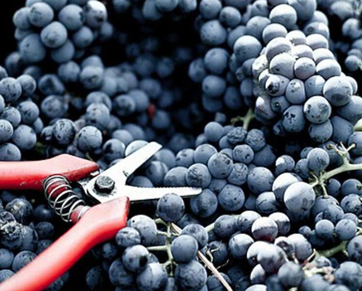 Hoogtepunten om de wijngaard op een andere wijze te ontdekken  © Chateau-Pesquier