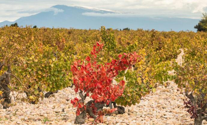 Wijnen uit de Vaucluse