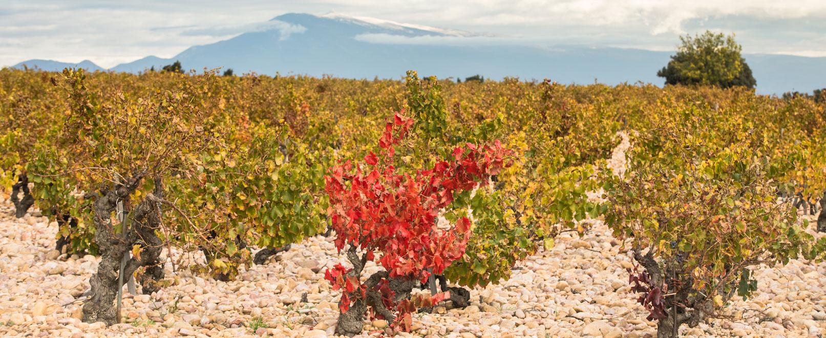 Wijnen uit de Vaucluse © Kessler
